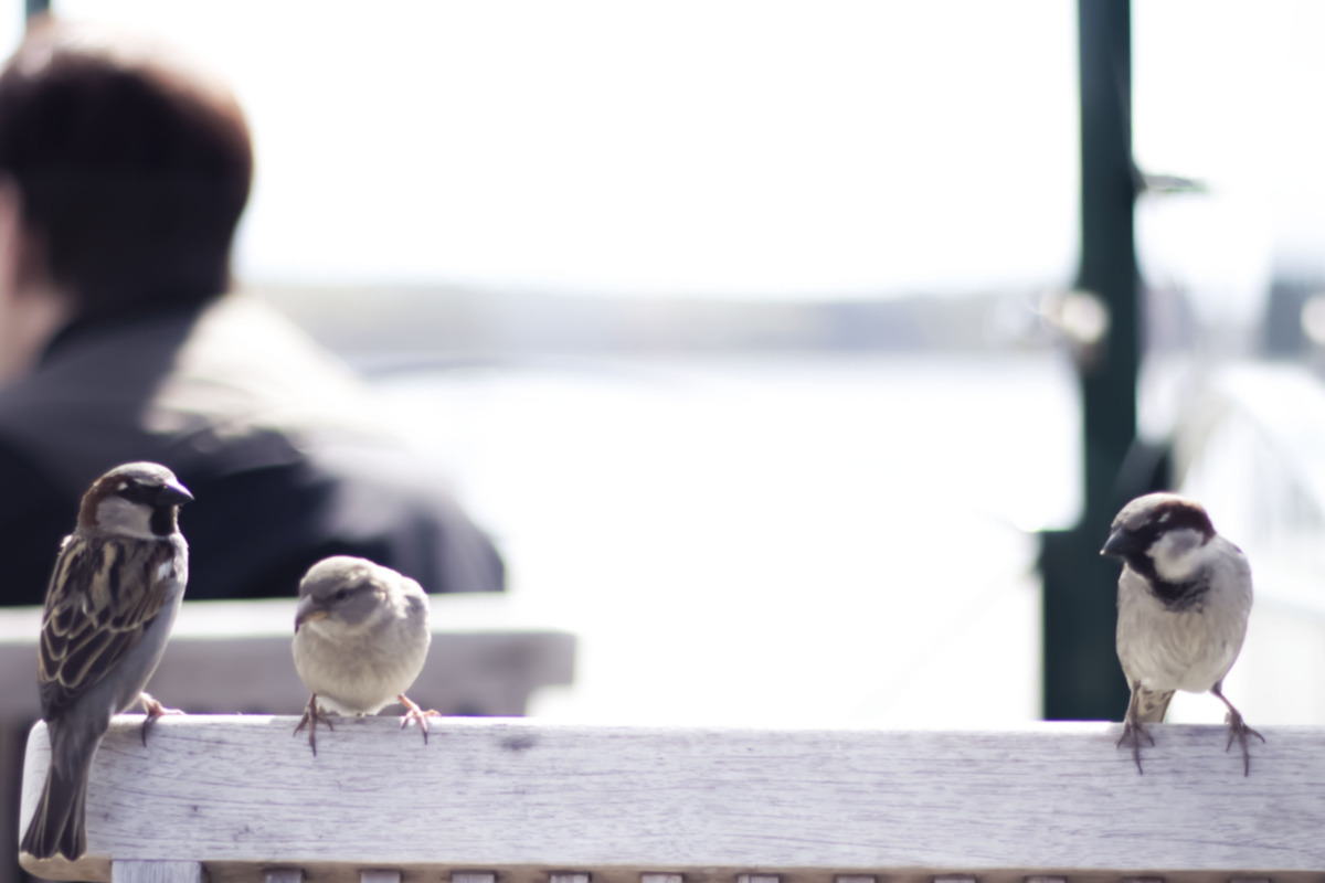 fearless birds at the cafe