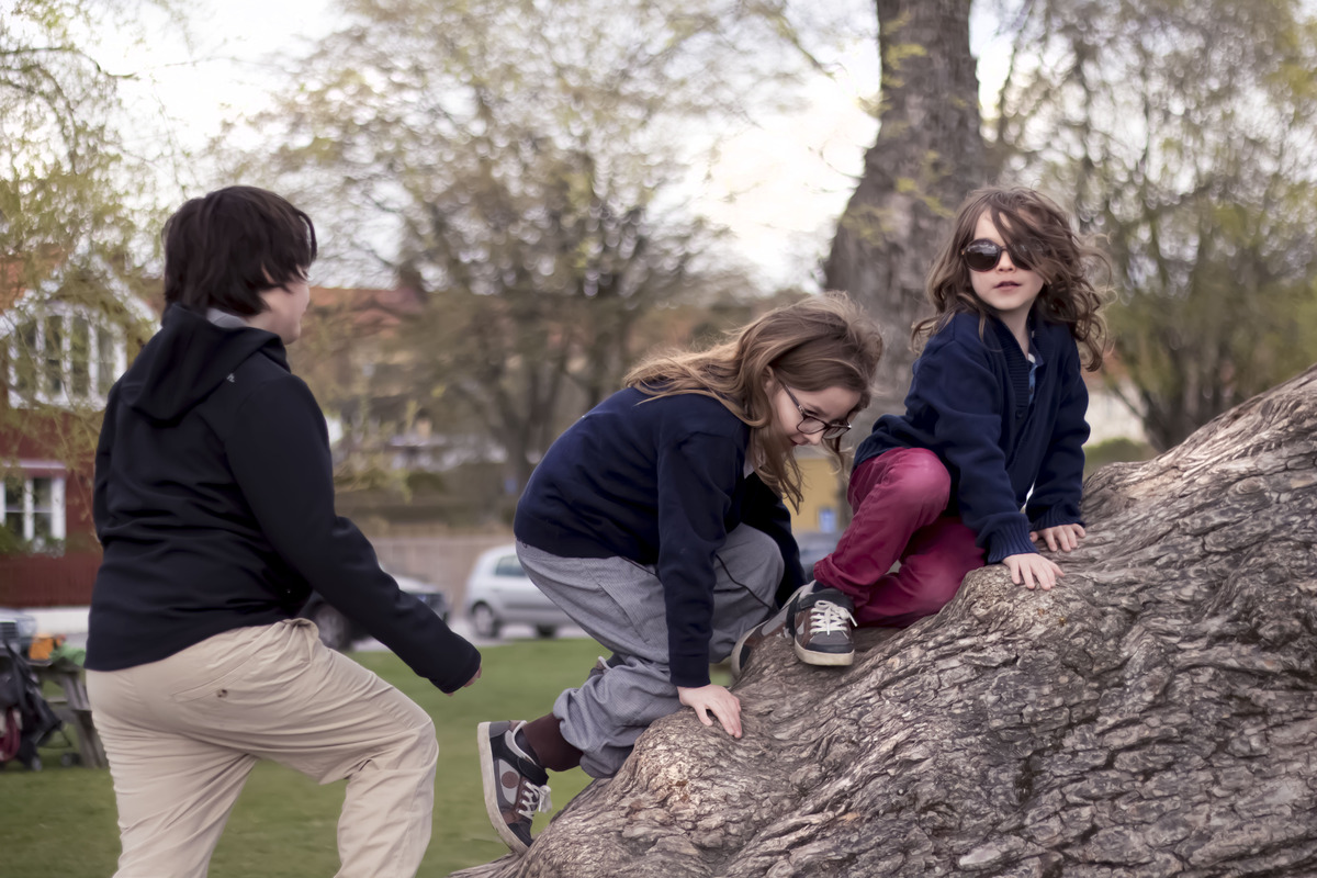 All three boys climbing a tree